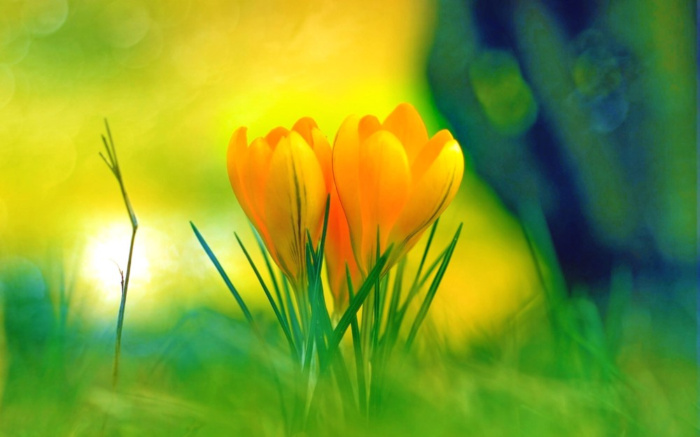 30+ Cute Flower Backgrounds, Wallpapers, Images, Screensavres