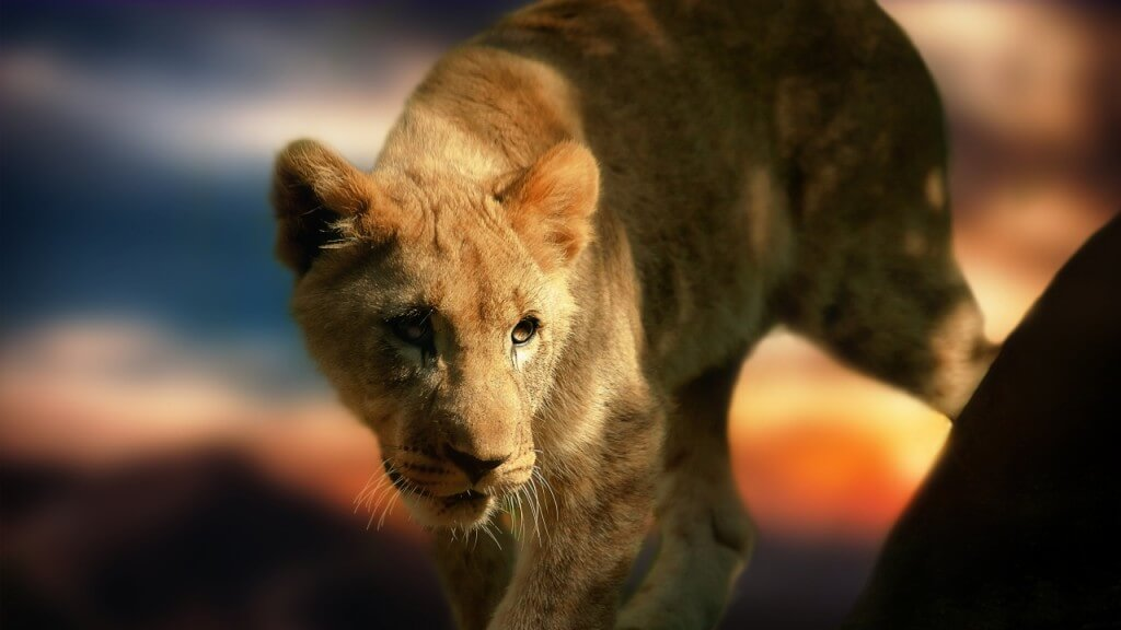 lion-cub-wallpapers