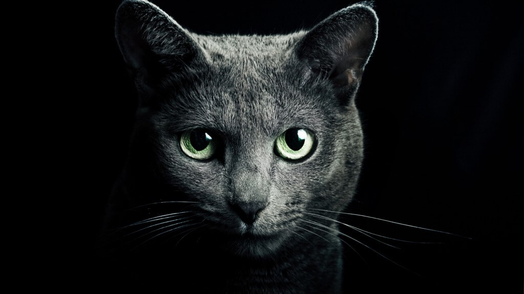 Black Cat Background