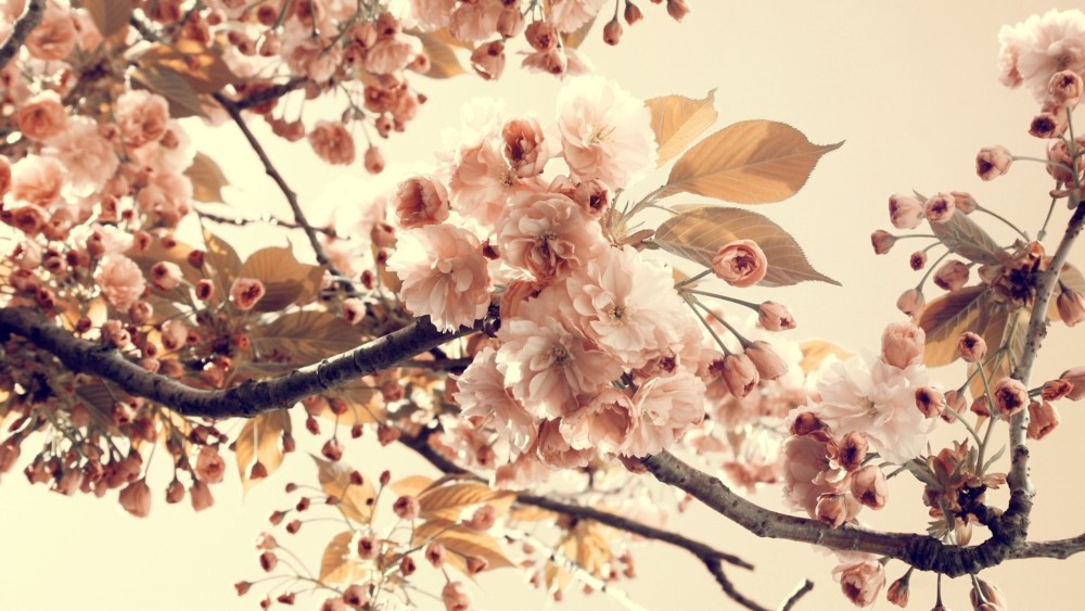 Vintage Flower Desktop Background