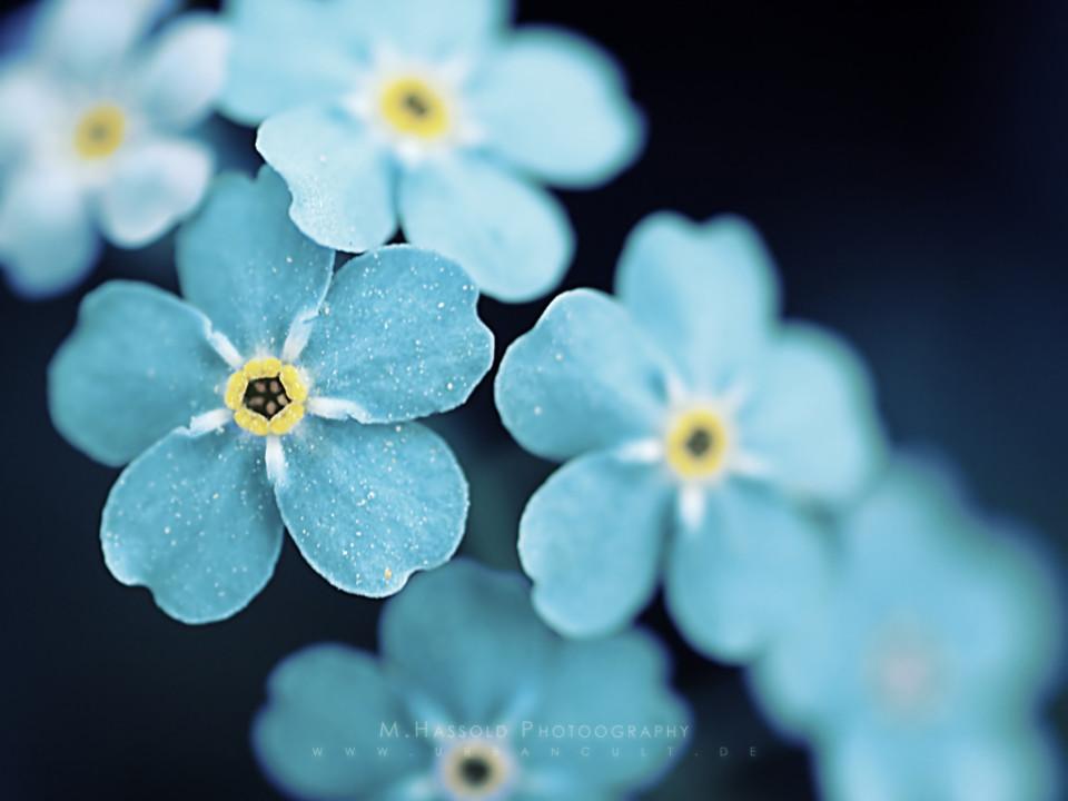 Vintage Flower Wallpaper Background