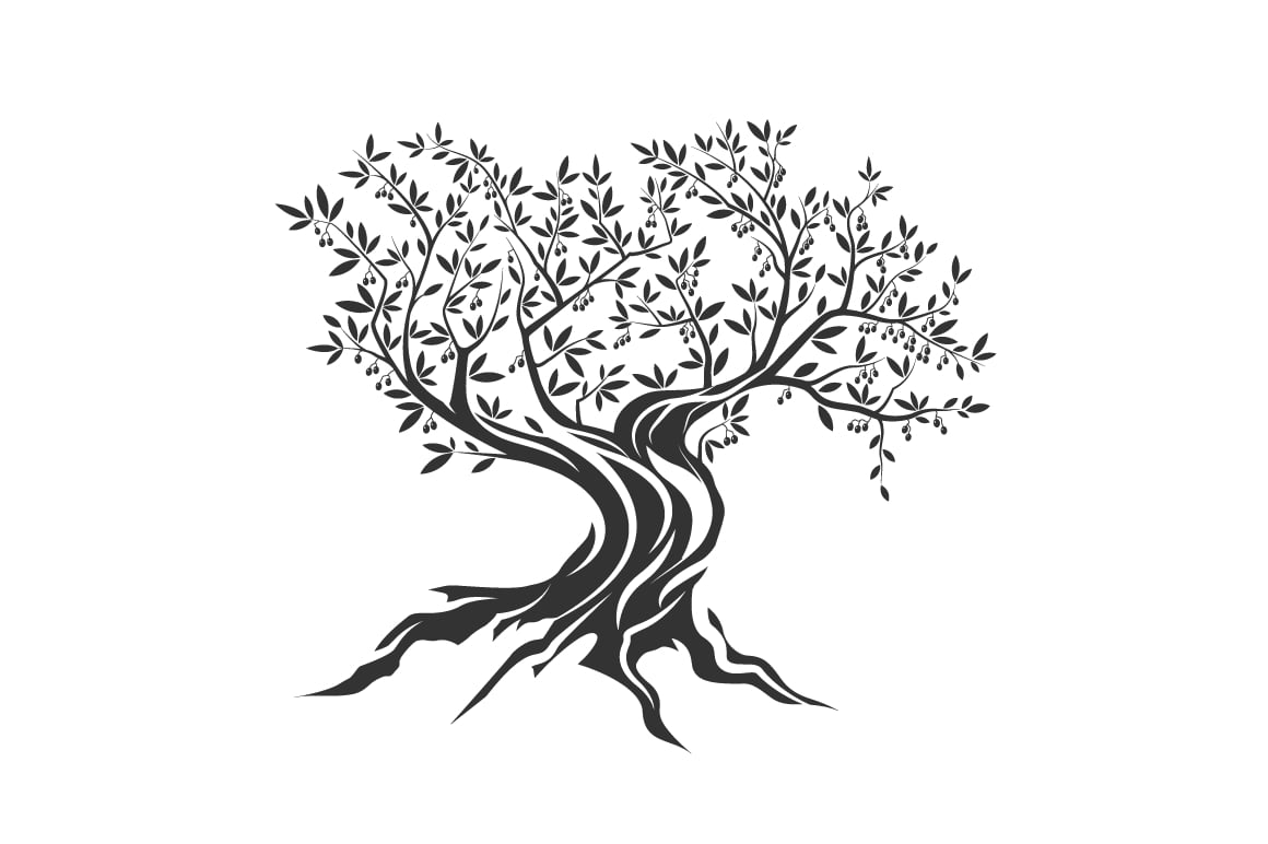 olive-tree-vector