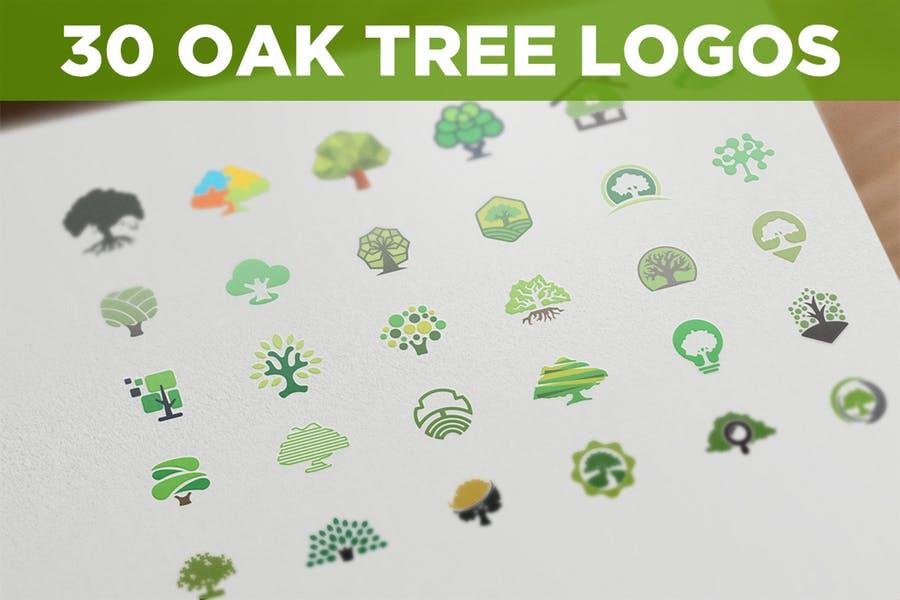 30 Oak Tree Logo Bundles