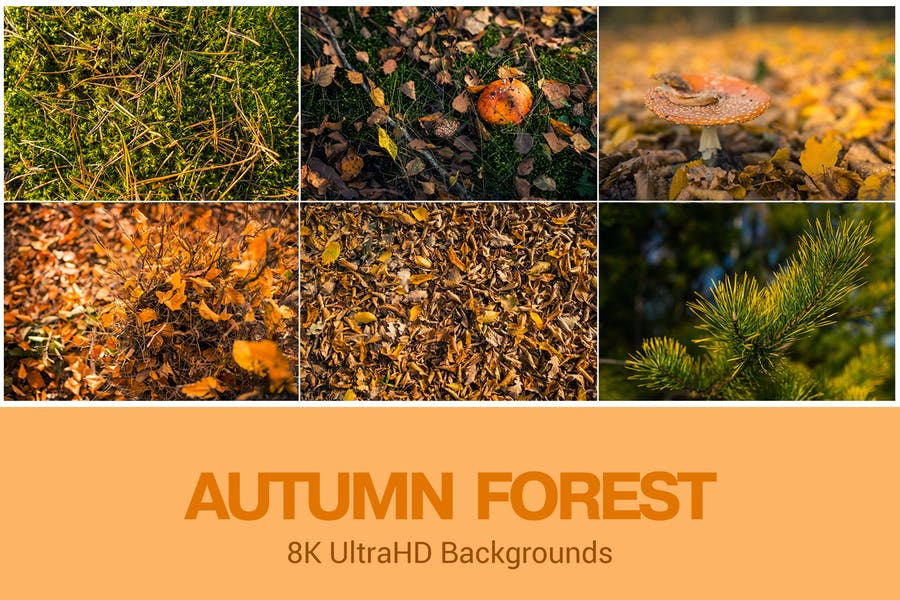 8 Autumn Themed Backgrounds