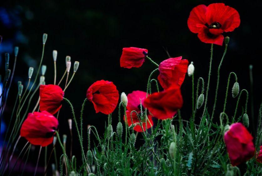 Creative HD Flower Backgrounds