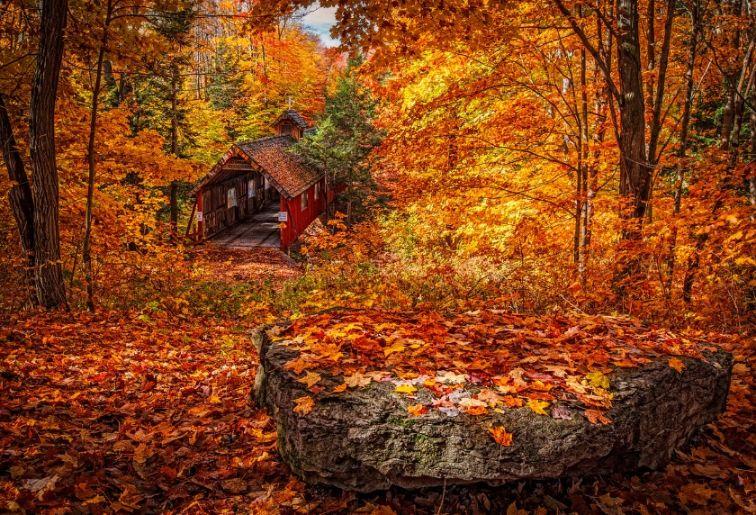 Free Autumn Forest Background