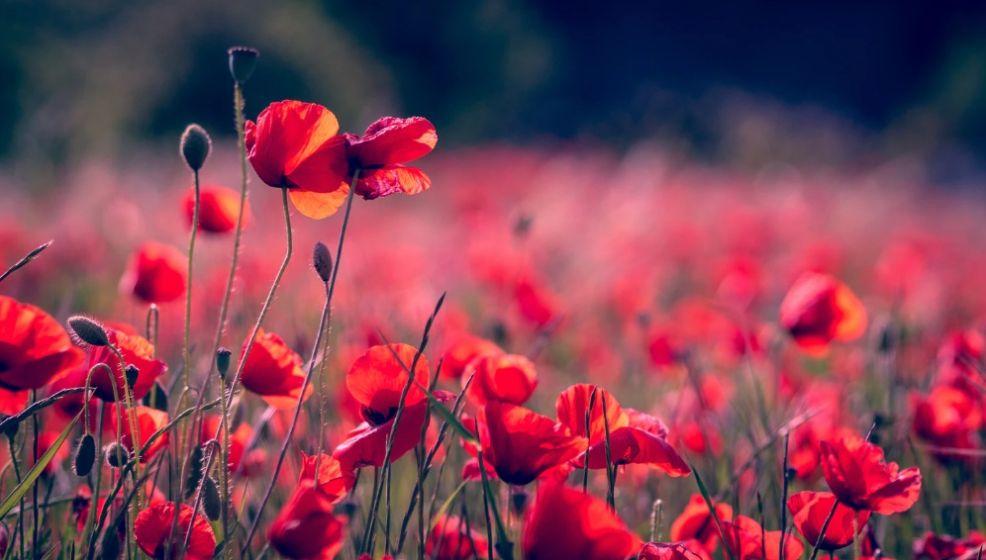Free Flower Background Image