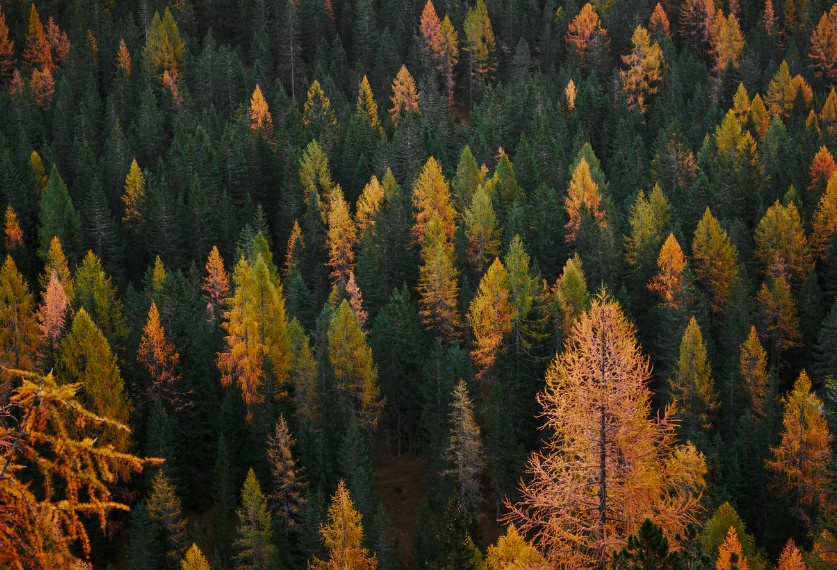 Free Forest Background Download