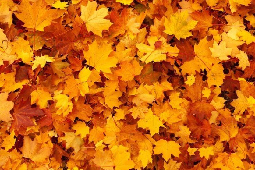 Free Gold Leaf Backgrounds