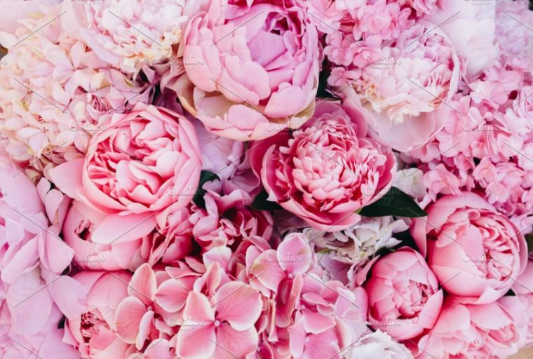 Pink Peonies Backgrounds Image