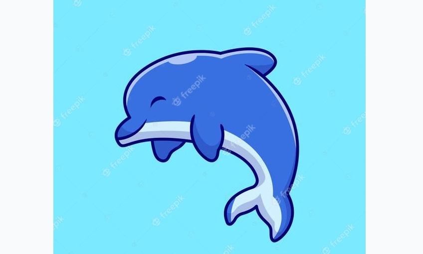 Cute Dolphin Illustrations