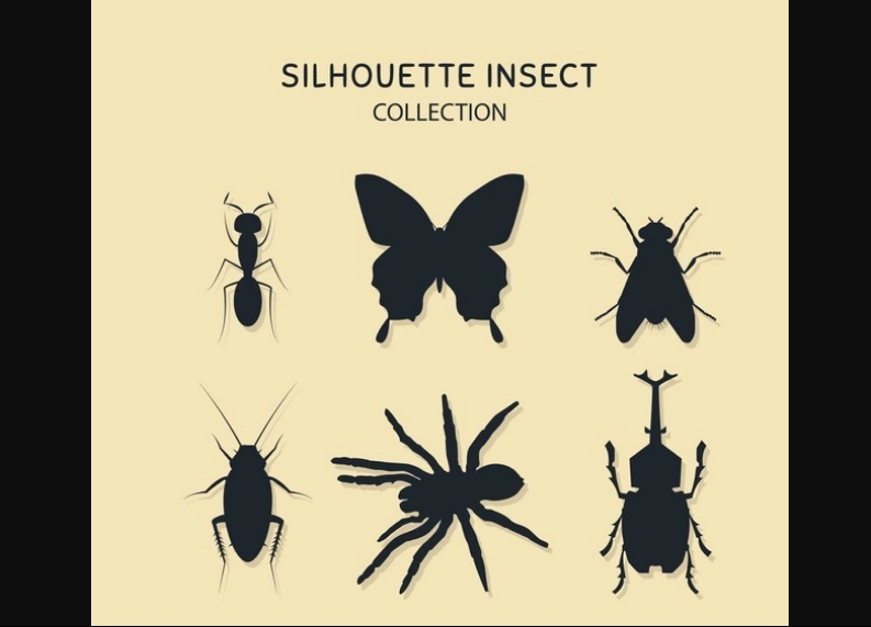 Insect Logo Design